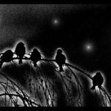 Воробьиная ночь